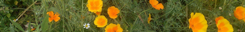 Fleurs d'herboriste