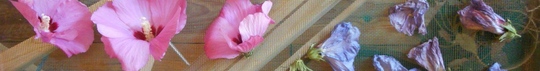 Séchage fleur